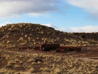 Petrified forest national park 7 1356118